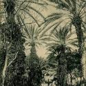 Jardin Marengo